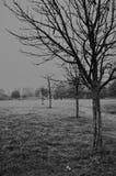 Treee isolato in un giorno di inverno Immagini Stock