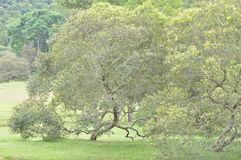 Treee at park stock photography