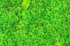 Treee verde Imagens de Stock Royalty Free