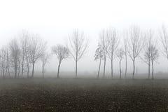 Treees в тумане Стоковая Фотография