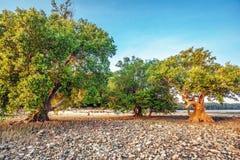 Treees на береге моря Стоковые Фото