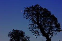 2 treees Стоковые Фотографии RF