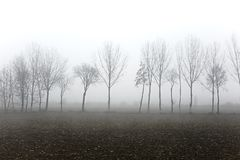 Treees im Nebel Stockfotografie
