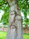 Treeface. Trees with character in the Derbyshire countryside Royalty Free Stock Photography