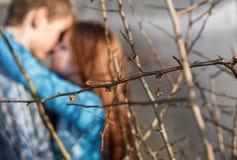 Treefilialer med att vara avfärdade leaves fotografering för bildbyråer