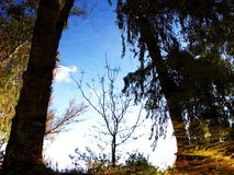 Treeflections Lizenzfreie Stockbilder