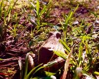 Treefrog смотря вне в большое за пределами стоковое фото