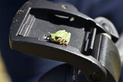 Treefrog Photo libre de droits