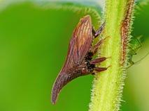 Treehopper op Stam Stock Fotografie