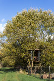 Treehouse Στοκ Φωτογραφίες