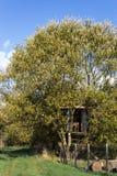 Treehouse Stock Photos