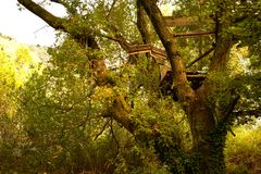A tree-house destroyed by a storm stock images