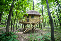 Treehouse in forrest. Wooden tree-house in the forrest stock images