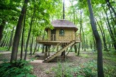 Treehouse i mest forrest Arkivbilder
