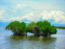 Treehouse in Mangrove Philippines Stock Images