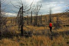 treeking通过一个被烧的森林的女孩 免版税库存照片
