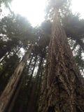 Treeline öppning Royaltyfria Foton
