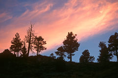 treeline σκιαγραφιών Στοκ εικόνες με δικαίωμα ελεύθερης χρήσης