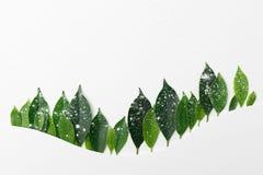 Treeline сделанное из зеленых листьев, минимальная концепция леса горы природы Плоский дизайн для задней земли, стоковая фотография rf