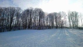 treeline Foto de archivo