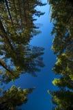 treeline Royaltyfri Foto