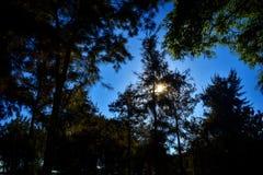 treeline photographie stock libre de droits