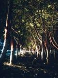 treeline arkivbilder