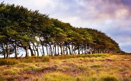 Treeline Стоковое Изображение