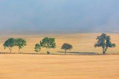 treeline fotografia stock libera da diritti
