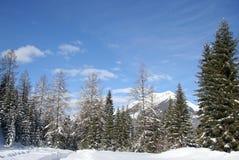 Treeline alpino da montanha foto de stock