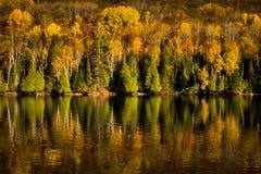 Treeline coloré en automne sur un lac image stock