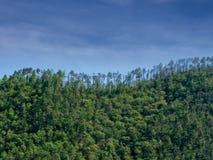 Treeline contro cielo blu Colline di Pinewood fotografia stock libera da diritti