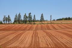 Treeline del coltivatore fotografia stock