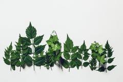 Treeline della foresta fatto delle foglie verdi su fondo bianco Concetto creativo della natura minima Disposizione piana immagini stock libere da diritti