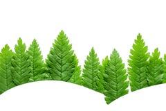 Treeline della foresta fatto delle foglie verdi su fondo luminoso fotografie stock