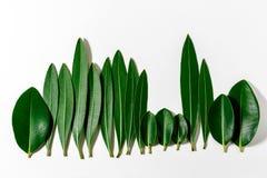 Treeline della foresta fatto delle foglie verdi su fondo luminoso immagine stock libera da diritti