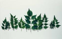 Treeline della foresta fatto delle foglie verdi su fondo luminoso minim fotografie stock