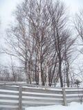 Treeline en la fotografía de la naturaleza de los árboles de la cerca y de abedul del invierno al aire libre Foto de archivo libre de regalías