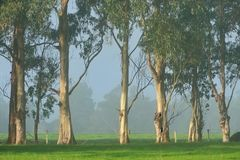 Treeline on the Farm Stock Image