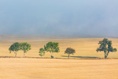 Treeline at the field Royalty Free Stock Photography