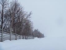 Treeline in fotografia della natura di inverno del lago Superiore della bufera di neve all'aperto Fotografia Stock Libera da Diritti