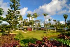 Treeline frondoso e gramado luxúria em um parque verde bonito Foto de Stock