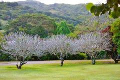 Treeline frondoso e prato inglese fertile in un bello parco verde Fotografie Stock Libere da Diritti