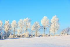 Treeline givré dans le paysage d'hiver Photos libres de droits