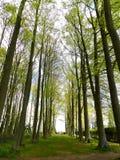 Treeline Stock Photography