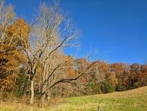 Treeline nella baia di Cades fotografia stock