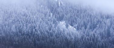 Treeline nevado fotos de stock