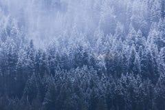 Treeline nevado imagens de stock