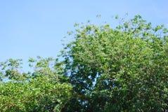 treeline fotografia stock