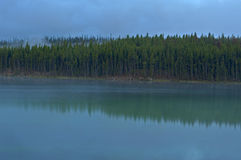 Treeline reflection in Herbert Lake, Banff National Park Stock Images